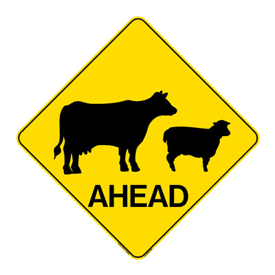 Cattle Sheep Ahead