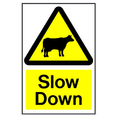 Cattle Slow Down