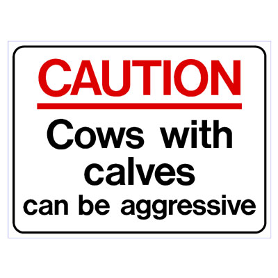 Caution Cows with Calves