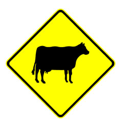 Road - Warning - Cow Area